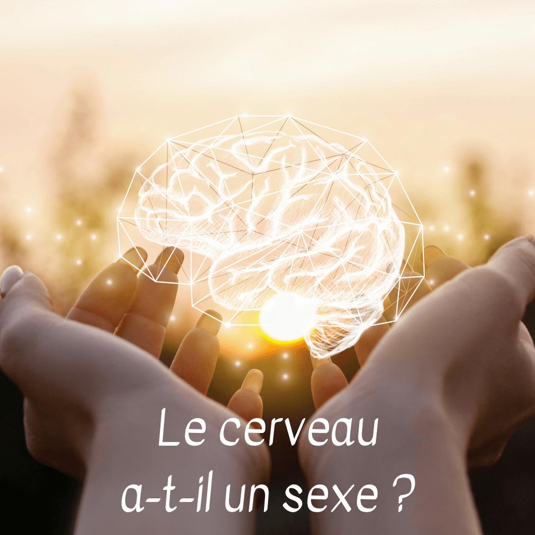 le cerveau a-t-il un sexe ?